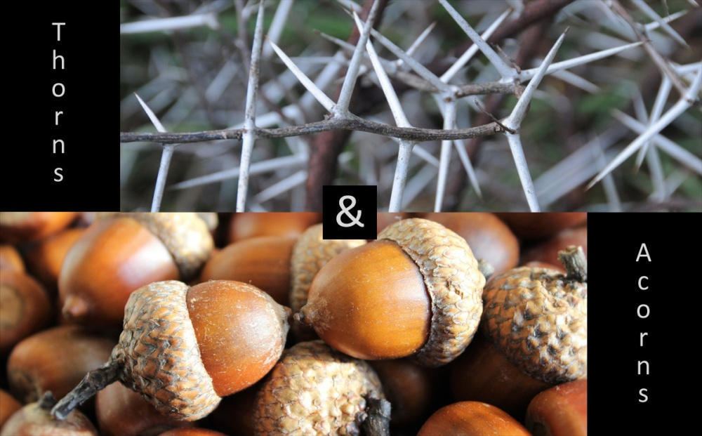 episode-45-thorns-acorns